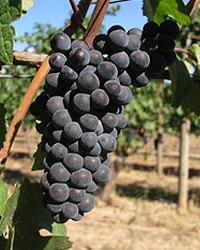 grape_05